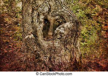 Man of the Forest - Face in an ancient gnarled tree created...