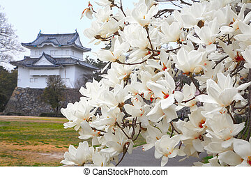 Magnolia flowers - White Spring magnolia flowers with Nagoya...