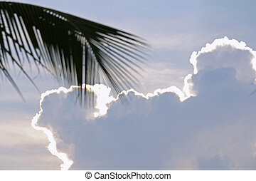Clouds behind fronds of coconut palm