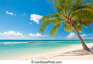 Barbados - Palms on the white beach and a turquoise sea on a...