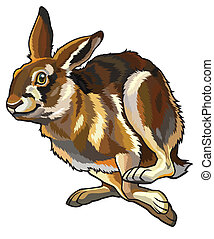 running hare,lepus europaeus,illustration isolated on white...