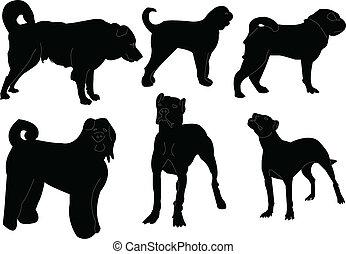 cachorros, cobrança, -, vetorial