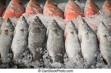 frozen white and red snapper arrange in row