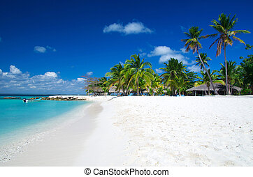 beach - palm trees on tropical beach