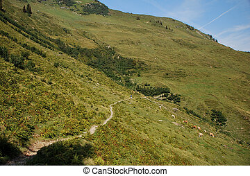 narrow path on mountain - a narrow path on mountain with...