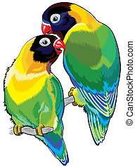 pair of masked lovebirds or eye ring lovebirds. Two small...