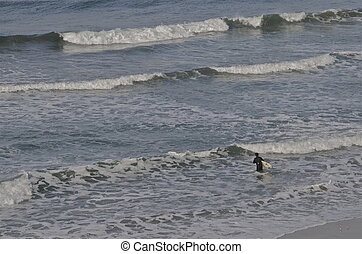 Lone Surfer Hits the Waves - A lone surfer carrying a surf...