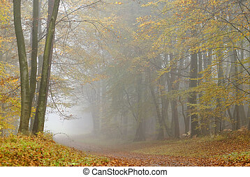 Misty forest - misty atmosphere in the forest,during fall...