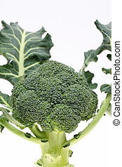 resh raw broccoli on white background