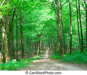 nature of summer path in green forest