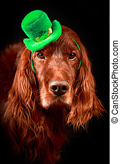 st.patrick day - irish dog in st.patrick hat