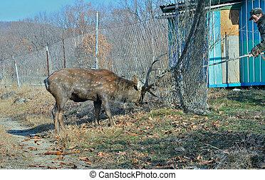 2, 鹿, 援救