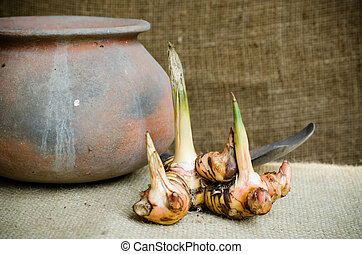 Galangal with clay pot on brown sack