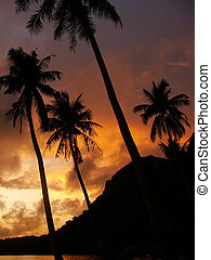 Tropical beach with palm trees at sunrise, Wua Talab island,...