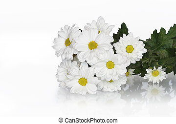 Ox-eye Daisy Bouquet - Bunch of ox-eye daisy isolated on...