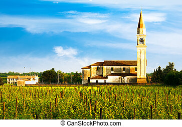 Vineyards row field with chirch - Green vineyards rows field...