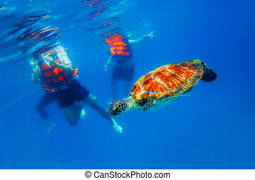 Green Turtle - Green Sea Turtle in blue ocean at Similan...
