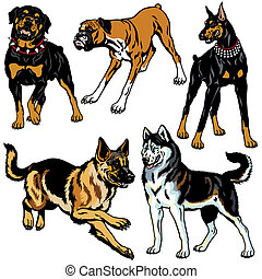 set with dogs - set with dog breeds, pictures isolated on...