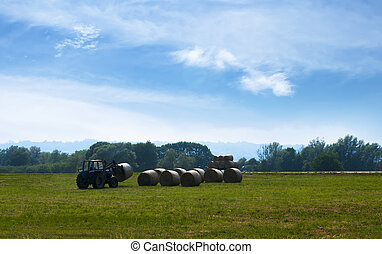 The tractor on the field gathers hay - The tractor on the...