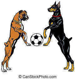 doberman and boxer - dogs doberman and boxer breeds,...