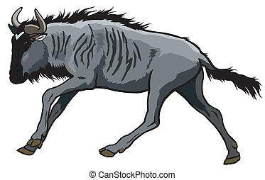 running blue wildebeest,connochaetes taurinus, side view...