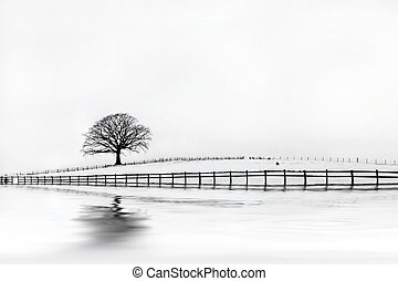 Oak Tree Winter Beauty - Oak tree in a field of snow in...