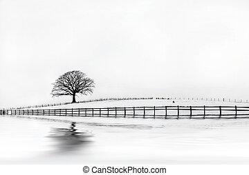 Oak Tree Winter Beauty - Oak tree in a field of snow in...