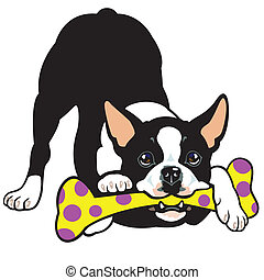 boston terrier - dog boston terrier breed, illustration...