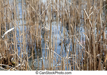 thicket texture in a pond