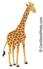 giraffe standing alone