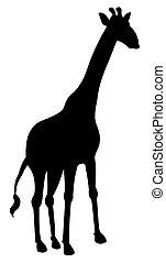 shadow of a giraffe