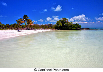 and rock in the relax of isla contoy mexico - coastline and...