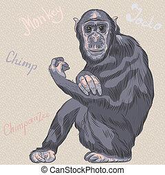 vector funny cartoon monkey Chimpanzee