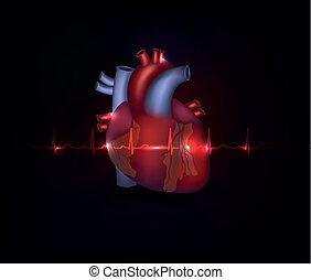Beautiful cardiology heart design and normal cardiogram -...