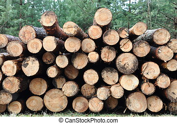 Tree felled in the forest product for the timber industry