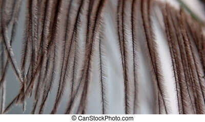 String of African ostrich feather-like leaves - Strings of...