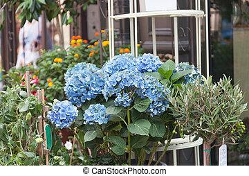Street show-window of flower shop in Europe