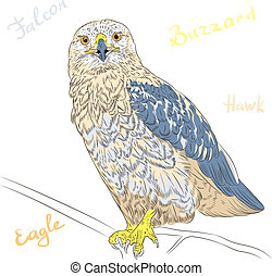 vector colorful bird Rough-legged Buzzard - sketch funny...
