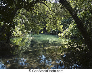 Primal Forest - A part of the primal forest in Krka Croatia...