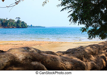 beautiful nature, blue water , tree and sea