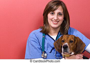 vétérinaire, à, beagle