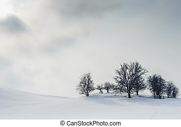 Trees on the hill in winter, visible sun and clouds. - Harsh...