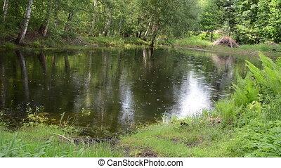 rain garden pond - it starts to rain disrupting calm garden...