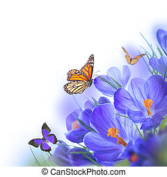Spring crocuses with butterfly, floral background