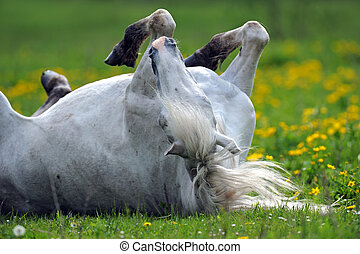 Horse on a green grass