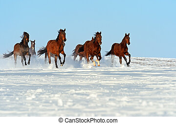 Horse - Herd of horses running through a snowy field gallop