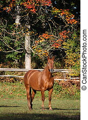 Chestnut horse at the pasture in autumn