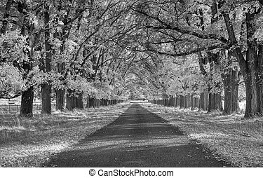 tree lined road - great image of a tree lined road