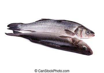 Mediterranean Seabass Dicentrarchus labrax - Raw Food - Fish...