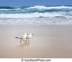 Companionship - Two seagulls strolling on an empty beach